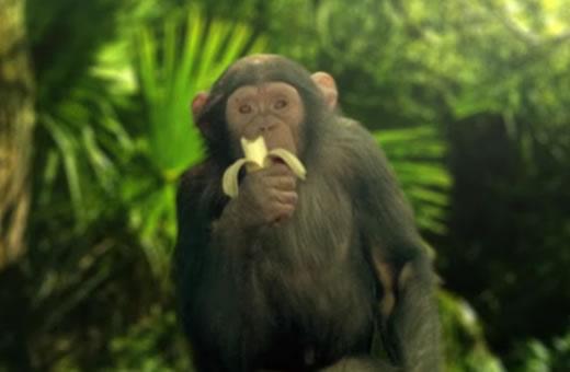 Save The Monkeys
